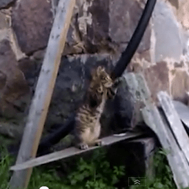 Cute of the Day: Cat With Amazing Defense