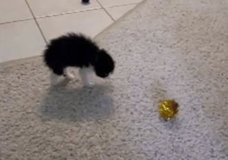 Cute of the Day: Kitten Tries to Intimidate a Ball