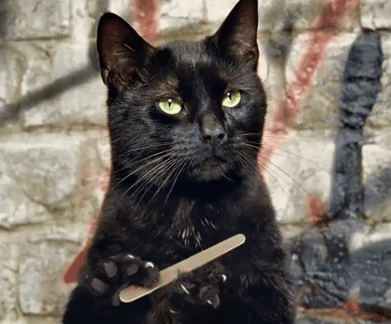 Saturday Morning Funny: If Cats Had Opposable Thumbs