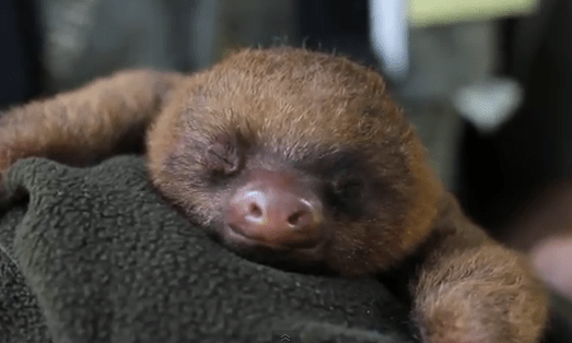 Cute happy sloth