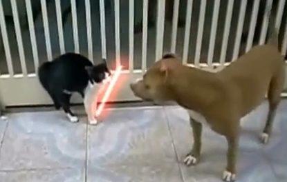 Saturday Morning Funnies: Jedi Cat Tricks