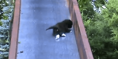 Cute of the Day: Kittens on a Slide