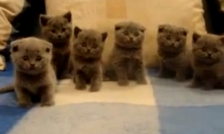 Cute of the Day: Synchronized Kitties