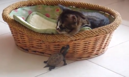 Cute of the Day: Turtle Loves Cat Pt. II