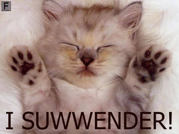 kittysurrender