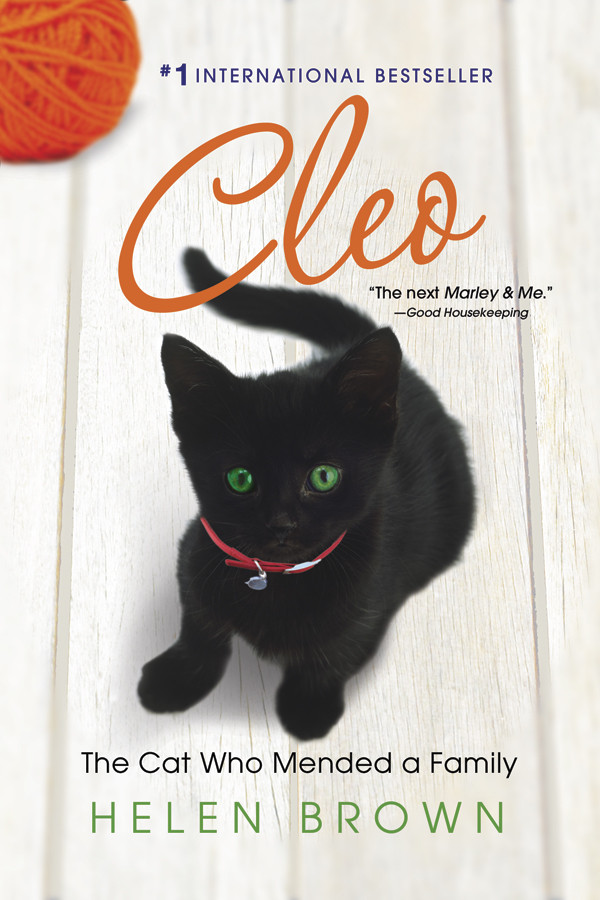 Cleo the cat who mended a family
