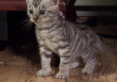 Cute of the Day: Baby Tabby Kittens