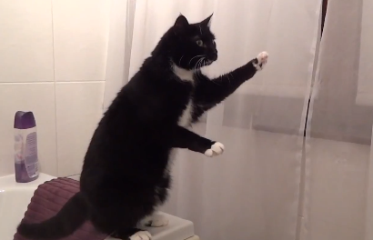 Saturday Morning Funny: Cat Poses in Mirror