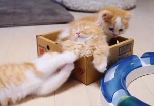 Cute orange kittens
