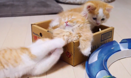 Cute of the Day: Three Adorable Kittens Playing