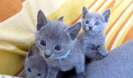 Cat Haven Kittens For Sale
