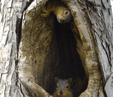 Cute of the Day: Baby Squirrels in Nests