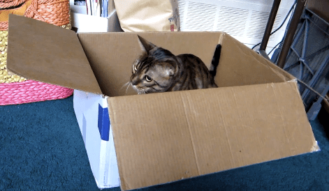 Cute of the Day: Cat Pounce
