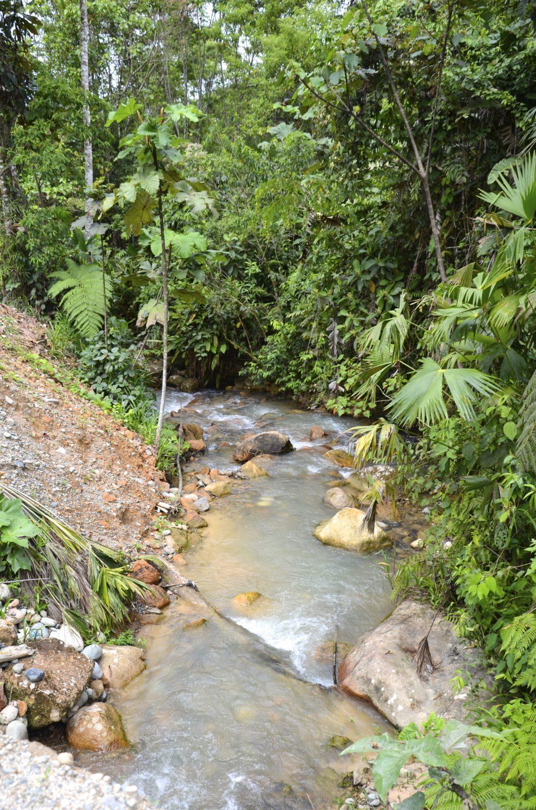 Stream Ecuador