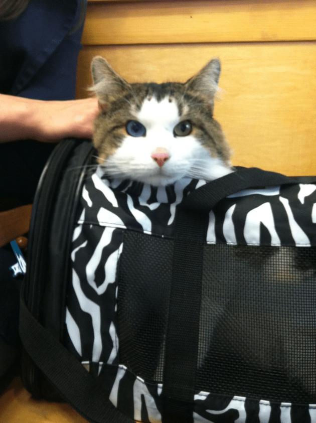Cat Bowie