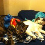 NYC Animal Care Centers App