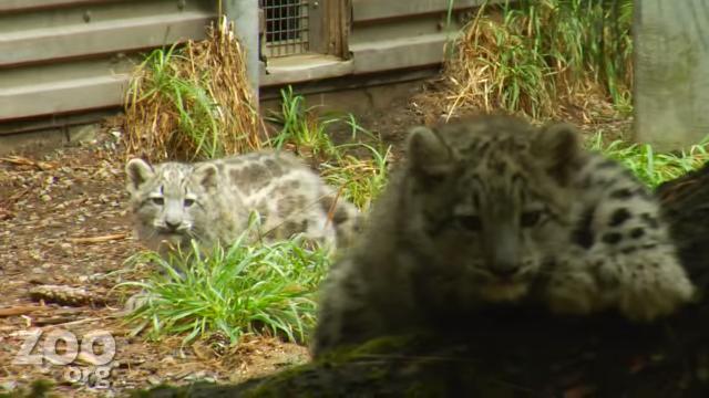 Catorday Snow cats