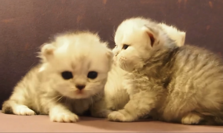Caturday: Fuzzy couch kittens!