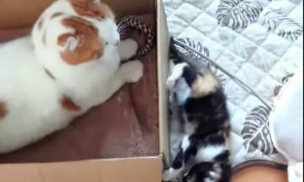 Caturday: Kittens are jerks