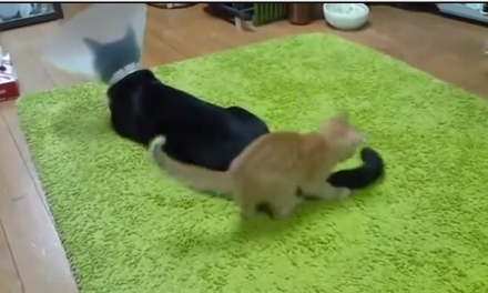 Caturday: Kittens are jerks #2
