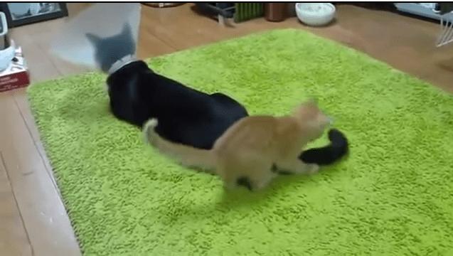 Caturday: Kittens are jerks #2