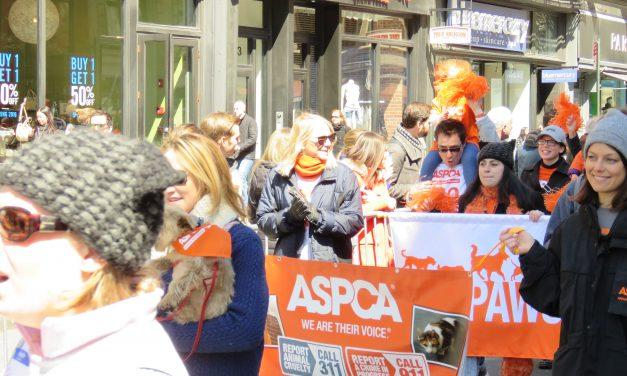 Adoptapalooza ASPCA Pride