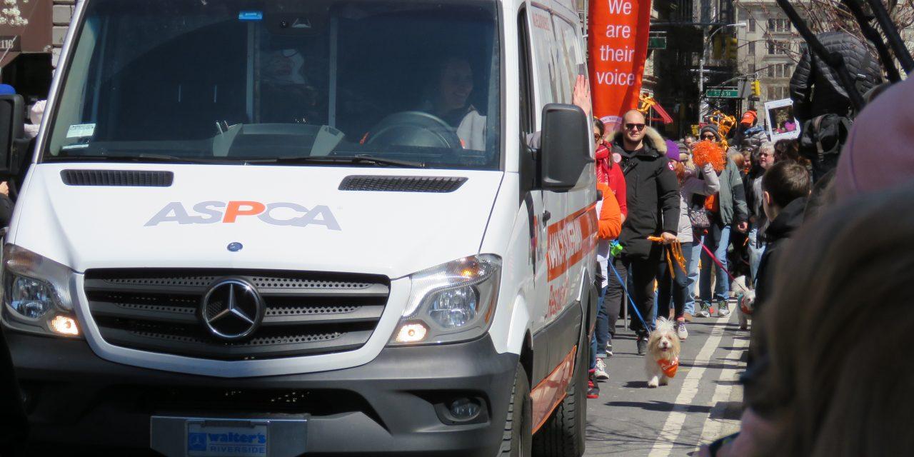 Adoptapalooza Spring Paws Parade 2016
