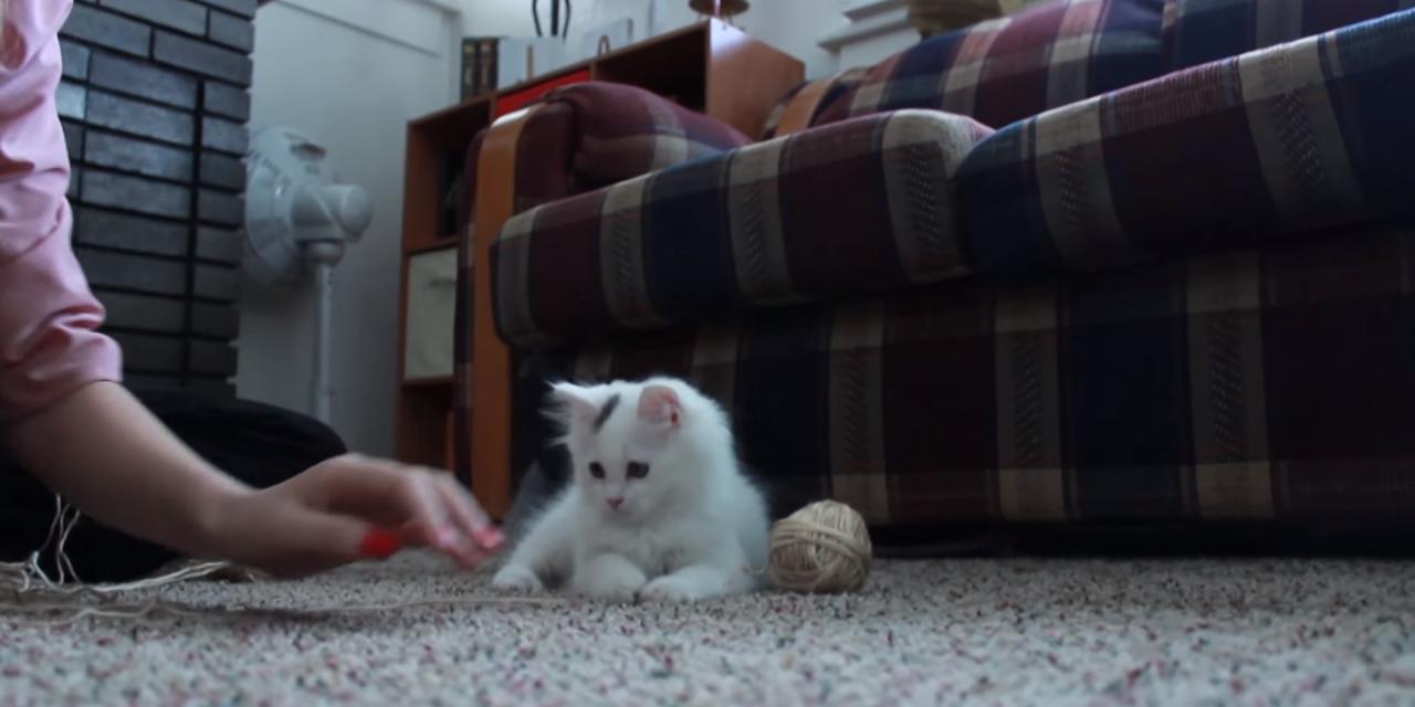 Caturday: Kitten Plays with Yarn
