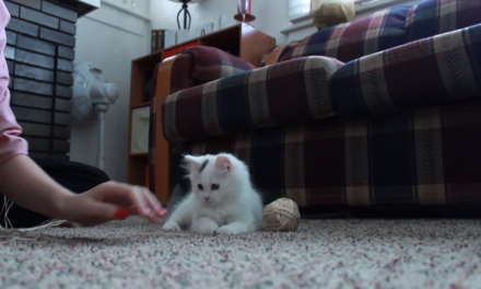 Caturday: Kitten Plays with Yarn