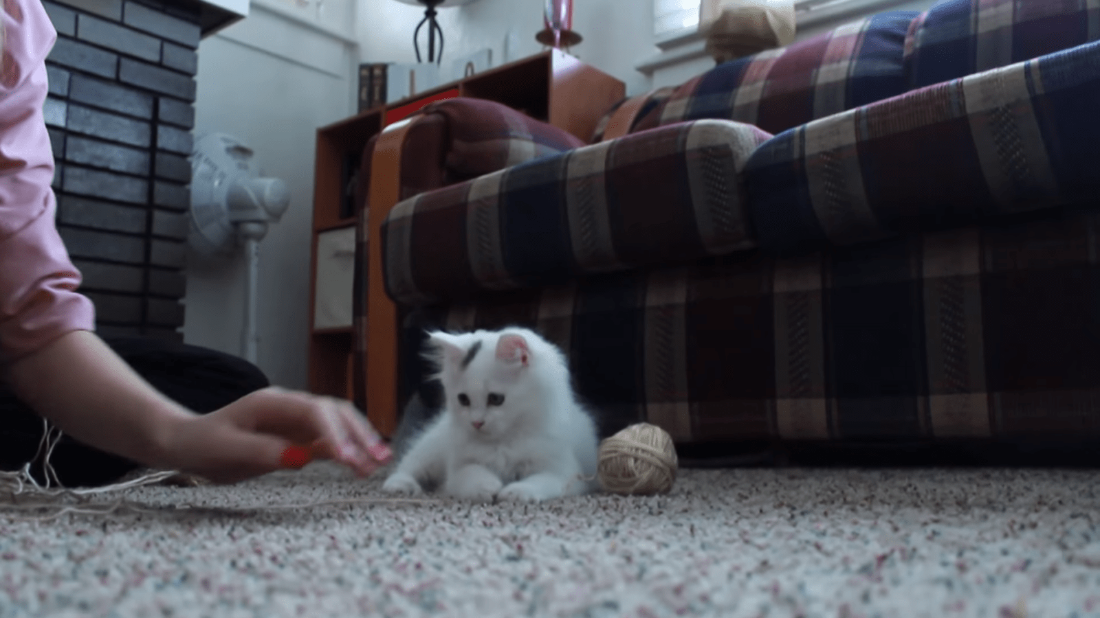 Yarn Kitten