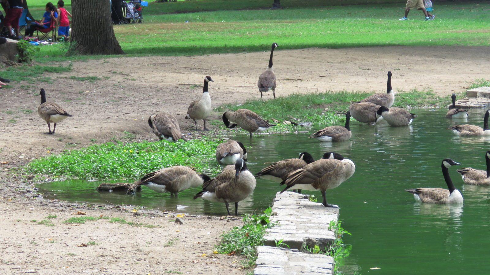 Nardio Explores Prospect Park 033