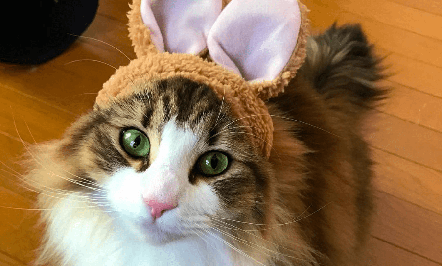 Caturday: macaron_xx_cat