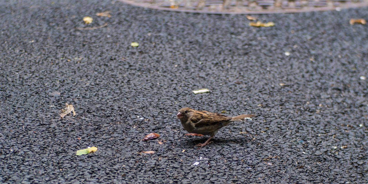 Picture of the Day: New York Street Nature