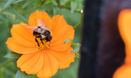 Picture Of The Day: The Iron Framed Flowers and bee
