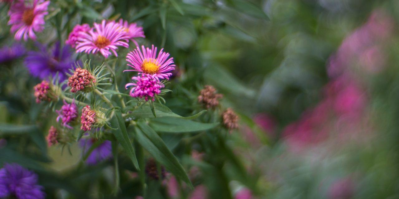 BOKEH DEBAUCHERY: The Flowers And The Swirls