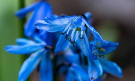 Monday Macro: Blue Stars