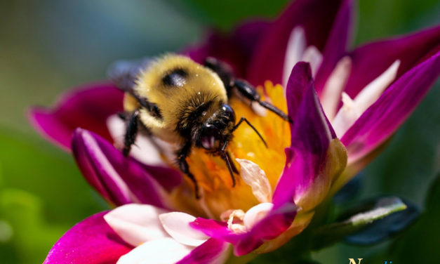 Macro Monday – Busy as a Bee