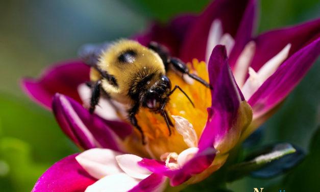 Macro Monday – Busy as a Bee
