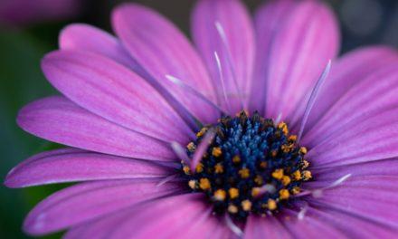 Friday Flower Fun