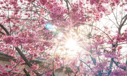 Remember Spring?